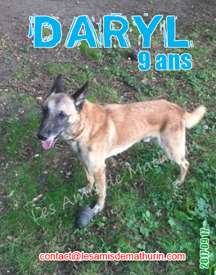 **A L'ADOPTION - DARYL (9 ans)**-daryl-03.png