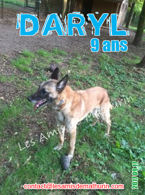 **A L'ADOPTION - DARYL (9 ans)**-daryl-04.png