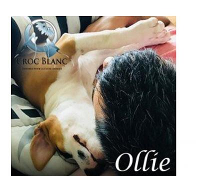 OLLIE - Adorable chiot femelle staff !-2.jpg