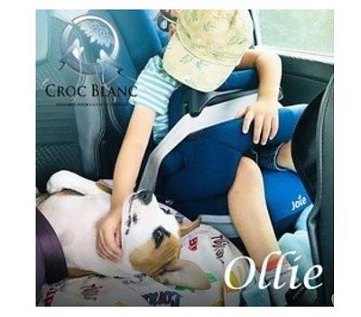 OLLIE - Adorable chiot femelle staff !-3.jpg