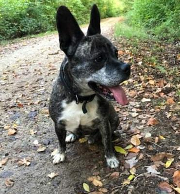 PAPY DE 10 ANS | STAFFY X BOULEDOGUE FR [NANCY] ok chat, ok humain-20210112_182651.jpg