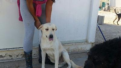Pepe adorable loulou actif 2 ans attend au refuge (Jaen, Espagne)-pepe-05.jpg