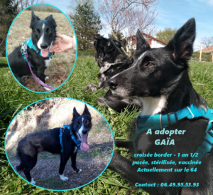 Nom : gaia-300x274.png Affichages : 333 Taille : 188,9 Ko