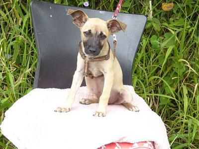 A ADOPTER PINKY CHIOT FEMELLE 3 MOIS 2,3KG-pinky.jpg