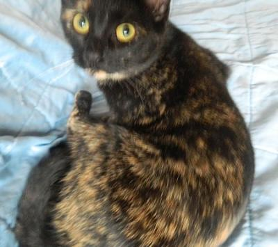Adorable chatons a adopter-cats-003.jpg