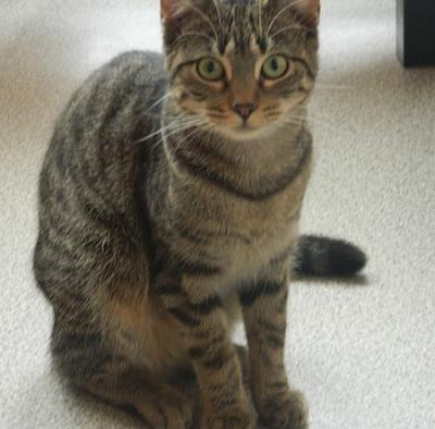 Adorable chatons a adopter-cats-016.jpg