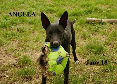 ANGELA - Type berger - SPA MONTAUBAN (82)-45360640_1102364273277739_5466907139131834368_o.jpg