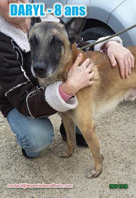 **A L'ADOPTION - DARYL (9 ans)**-daryl-modif-08.jpg