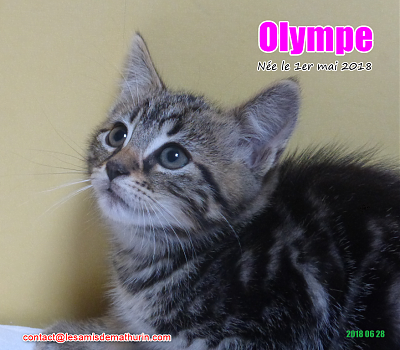 ***A L'ADOPTION - OLYMPE (2 mois)-olympe-03.png