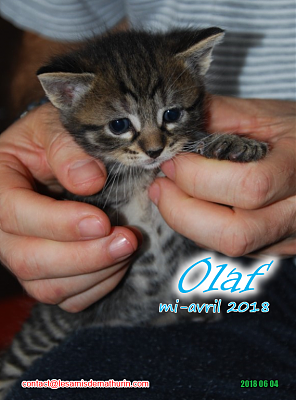 **A l'adoption - Prunelle et ses 6 chatons**-olaf-02.png
