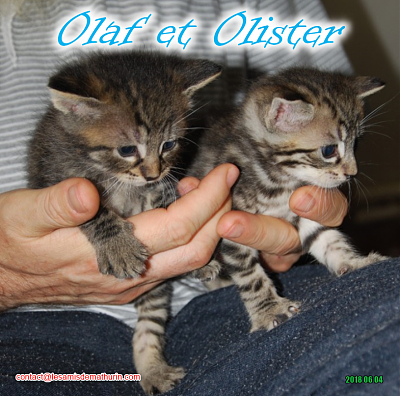 **A l'adoption - Prunelle et ses 6 chatons**-olaf-olister-duo.png