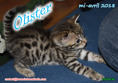 **A l'adoption - Prunelle et ses 6 chatons**-olister-03.png