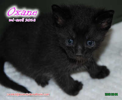 **A l'adoption - Prunelle et ses 6 chatons**-oxane-02.png