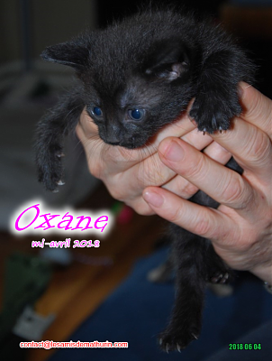 **A l'adoption - Prunelle et ses 6 chatons**-oxane-03.png