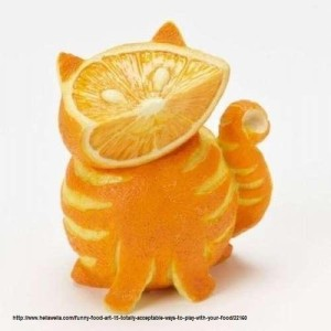 Nom : orange chat.jpg