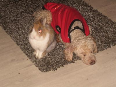 Adopter un lapin quand on a chiens et chats?-57_23-10.jpg