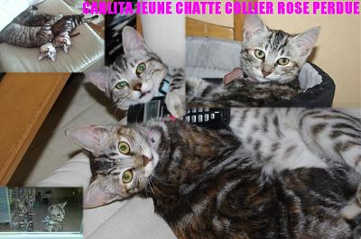 PERDUE Carlita, chatte de 7 mois  Mehers (41)-302835_2268372101475_1013743116_32621983_614744232_n.jpg