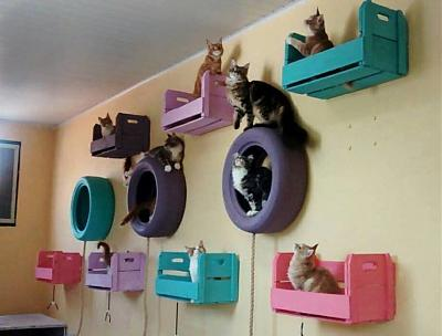 Idees sympa pour aménager une chatterie, refuge-11903853_452984568217437_9018766809151695578_n.jpg