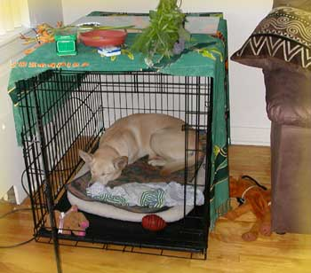 enclos de convalescence int rieur pour chien de 22 kilos. Black Bedroom Furniture Sets. Home Design Ideas