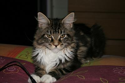 Chats, Chats et Chats !!-img_5909.jpg