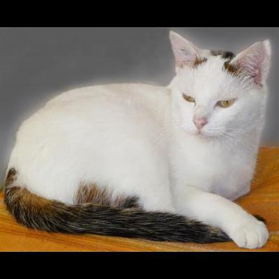 Chat sexe argenteuil