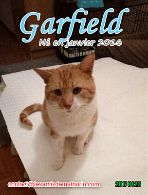 **A L'ADOPTION - GARFIELD (2 ans)**-garfield-01.png