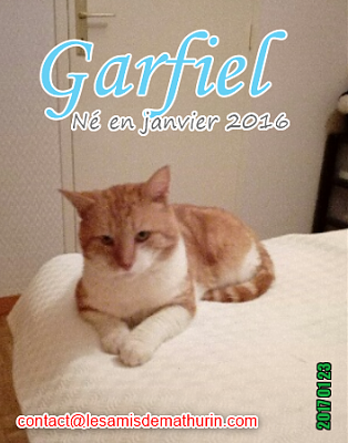 **A L'ADOPTION - GARFIELD (2 ans)**-garfield-02.png