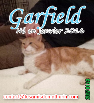 Nom : GARFIELD 03.png Affichages : 48 Taille : 189,9 Ko