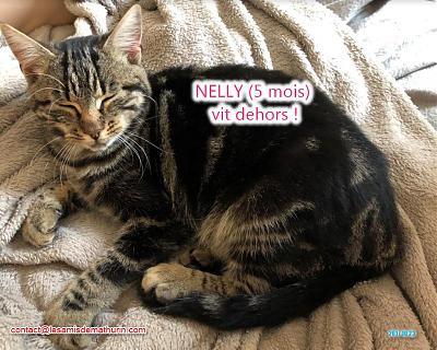 **A L'ADOPTION - NELLY (5 mois)**-nelly-01.jpg