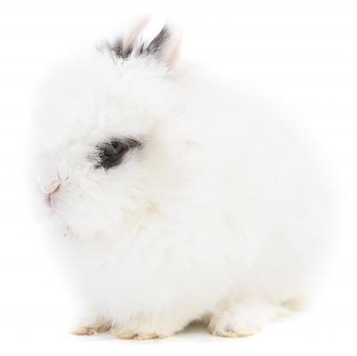 Lolly lapine angora, Adoptez-là!-lolly3.jpg