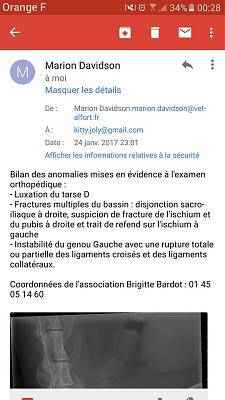 URGENT cagnotte pour opérer kitty cat-16195561_10211474270950031_7904178038322303718_n.jpg
